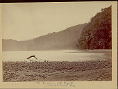 view View of Bay and Surrounding Tropical Forest at Point of Terminus for Proposed Canal 1870 digital asset number 1