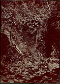 view View of Waterfalls in Tropical Forest 1870 digital asset number 1