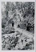 view Three Amahuaca Men in Costume and Carrying Burden Bags with Tumplines On Jungle Path JUL 1910 digital asset number 1