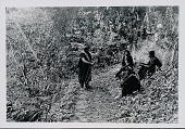 view Four Amahuaca Men Wearing Face Paint and Costume, One with Bow and Arrow, on Jungle Path JUL 1910 digital asset number 1