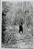 view Amahuaca Man, Holding Bow and Arrow on Jungle Path JUL 1910 digital asset number 1