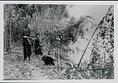 view Four Amahuaca Men in Costume, One Aiming Bow and Arrow at River's Edge JUL 1910 digital asset number 1