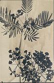 view Detail of Flowering Plant 1901 digital asset number 1