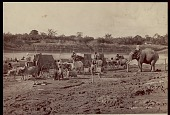 view Assamese men with elephant and ox carts transporting tea, undated digital asset number 1