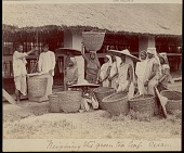 view Assamese women bringing baskets of tea leaves to be weighed, undated digital asset number 1