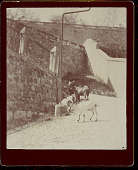 view Two Goats on Cobblestone Street Near Stone Walkway and Walls 1896 digital asset number 1