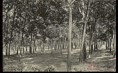 view View of Rubber Plantation n.d digital asset number 1