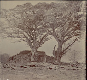 view View of Southern Side of Ruins Showing Masonry Walls of Mound and Stone Grave? Markers at Base of Trees n.d digital asset number 1