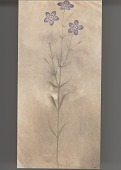 view Flowering Plant 1889 Painting/Photomechanical digital asset number 1