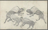 view Anonymous Plains Indian drawing of four buffalo, with one defecating, n.d digital asset number 1
