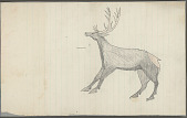 view Anonymous Plains Indian drawing of elk, n.d digital asset number 1