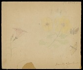 view Yellow and Pink Flowers; Brown and Yellow Butterflies; Drawing in Two Pieces Drawing digital asset: Yellow and Pink Flowers; Brown and Yellow Butterflies; Drawing in Two Pieces Drawing