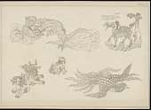 view Animal Designs n.d. Photo-Lithograph digital asset number 1