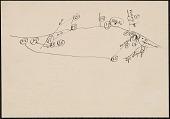 view Sketch map of Arkansas River, Neosho River and Kansas River, giving Kansa place names 1882 ? digital asset number 1