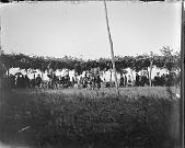 view Men dancing with spectators under brush arbor in background digital asset: Men dancing with spectators under brush arbor in background