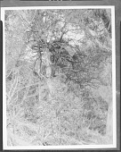view Apache tree burial 1904 digital asset number 1