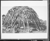 view Jicarilla Apache framework of poles bent together at the top with brush covering. 1903 digital asset number 1