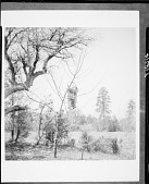 view Jicarilla Apache cradle hanging from a tree; possibly tree burial for young baby. 1903 digital asset number 1