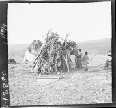 view Apache brush huts and group of young children outside. 1903 digital asset number 1