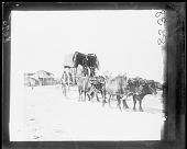 view Covered wagon and double team oxen digital asset number 1