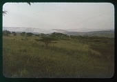 view Burning the hills; planoform trees-very African, circa 1956 digital asset number 1