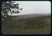 view Planoform trees, circa 1956 digital asset number 1