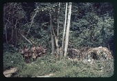 view Iture Pygmy dwellings (Albert National Park), circa 1957 digital asset number 1