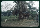 view Congolese villagers, circa 1957 digital asset number 1