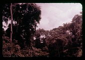 view Iture Forest, circa 1957 digital asset number 1
