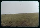 view Albert Park Antelope, etc, circa 1957 digital asset number 1