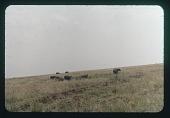 view Albert Park Buffalo, circa 1957 digital asset number 1