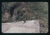 view Albert Park- 'Toad' on block, circa 1957 digital asset number 1