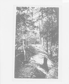 view Old Indian Trail, Conesus Lake, New York 1918 digital asset number 1