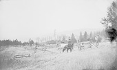 view Man Riding Horse in Corral; Other Horse and Man Nearby 1890 digital asset number 1