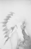 view [Portrait (Profile) of Francis La Flesche wearing feather headdress] May 11, 1902 digital asset number 1