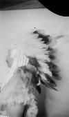 view [Half-length portrait (profile) of Francis La Flesche wearing feather headdress] May 11, 1902 digital asset number 1