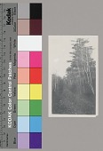 view [Path in wooded area in Red Lake in fall], 1934 digital asset number 1
