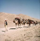 view Caravan to Kabul 119 1975 digital asset number 1