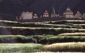 view Film Studies of Traditional Tibetan Life and Culture: Ladakh, India 7/21/1978 (1:45pm) digital asset number 1