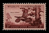 view 3c Wild Turkey single digital asset number 1