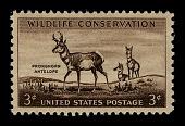 view 3c Pronghorn Antelope single digital asset number 1