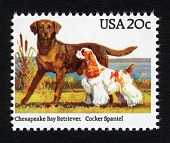 view 20c Retriever and Spaniel single digital asset number 1