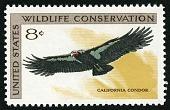 view 8c California Condor single digital asset number 1
