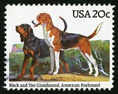 view 20c Black and Tan Coonhound and American Foxhound single digital asset number 1