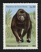 view 1.50p Gorilla single digital asset number 1