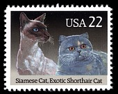 view 22c Siamese & Exotic Shorthair Cats single digital asset number 1