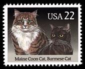 view 22c Maine Coon & Burmese Cats single digital asset number 1