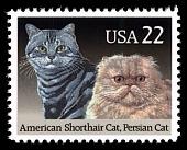 view 22c American Shorthair & Persian Cats single digital asset number 1