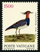 view 1500 lire Lapwing Plover single digital asset number 1