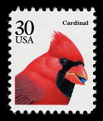 view 30c Cardinal single digital asset number 1